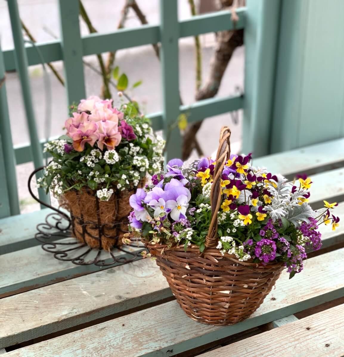 春のお花寄せ植え